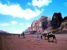 Camel Tour - Wadi Rum Desert Tours
